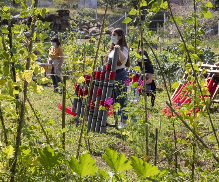 Concerto improvável numa horta comunitária 1